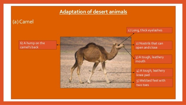 characteristics of the desert Desert climate dry tropical climate (bw) the dry desert is in köppen's bwhclimate categoryit is a low latitude climate the bstands for dry desert climates.