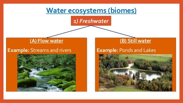 Ch4less3what Are The Characteristics Of Different Biomes And Aqua