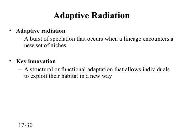 Key Innovations and Adaptive Radiations
