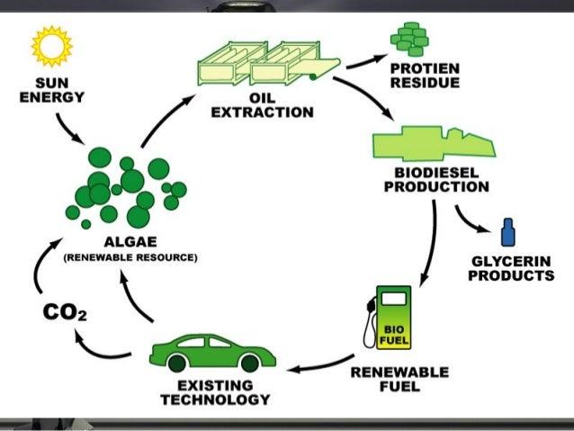 Ap environmental science ch 16 energy conservation miller lite 38 get energy efficient ccuart Choice Image
