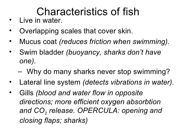 Ch 25 to 27 vertebratesrevised for Characteristics of fish