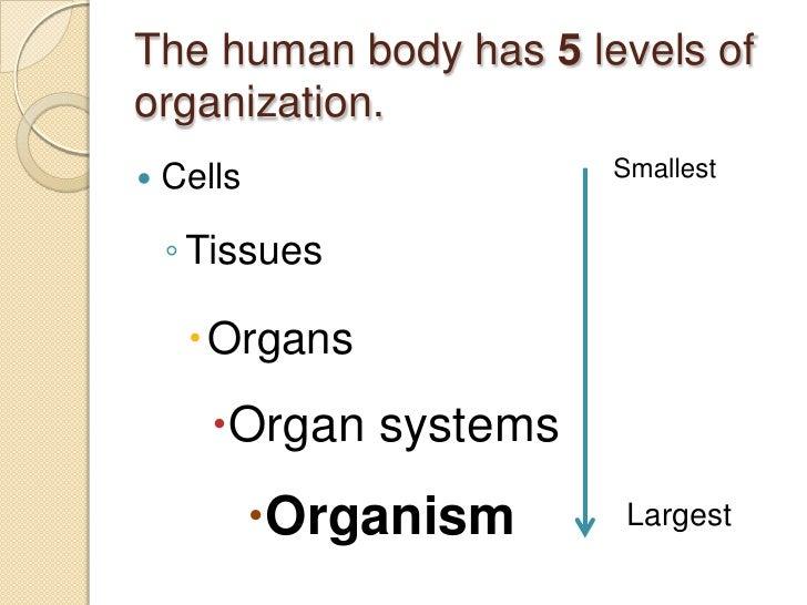 Ch. 27 levels of organization