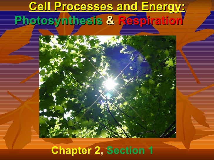 Cell Processes and Energy:Photosynthesis & Respiration      Chapter 2, Section 1