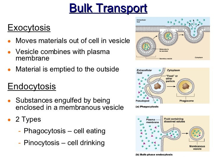 Ch 3 Cell Physiology