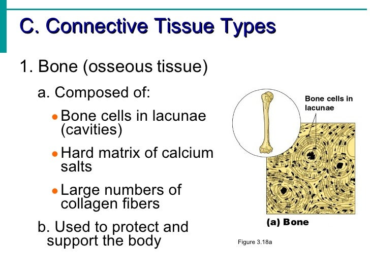Day 211 Muscles further Respiratory System also Human Anatomy And Physiology I likewise 3863212 additionally Index php. on figure 1 9 body cavities