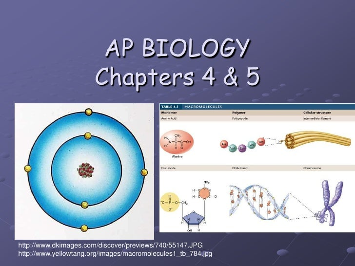 AP BIOLOGYChapters 4 & 5<br />http://www.dkimages.com/discover/previews/740/55147.JPG<br />http://www.yellowtang.org/image...