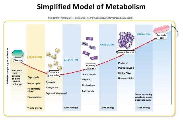 ch 7 microbial metabolism 4 638 microbial metabolism chart ibov jonathandedecker com