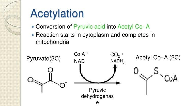Oxaloacetic Acid Decarboxylation Respiration