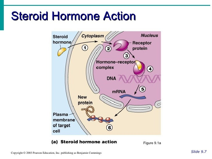 second messenger steroid hormones
