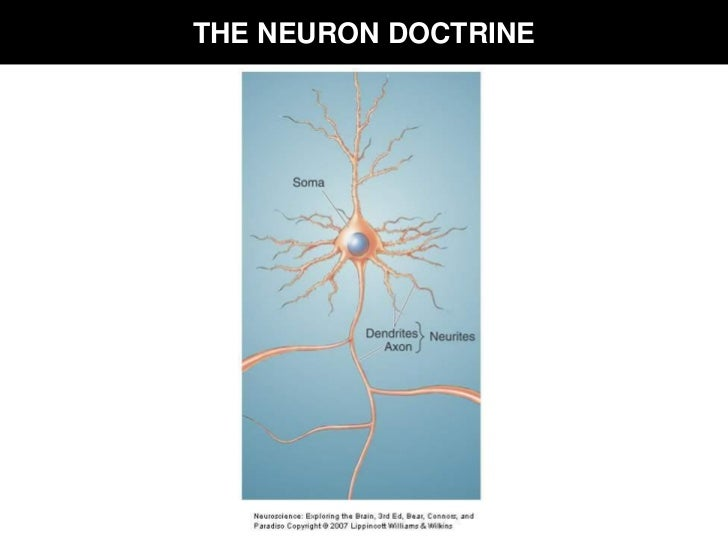 what is the neuron doctrine