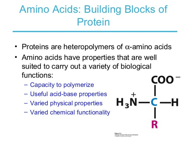 Amino Acids Are Useful Building Blocks For Peptide Synthesis
