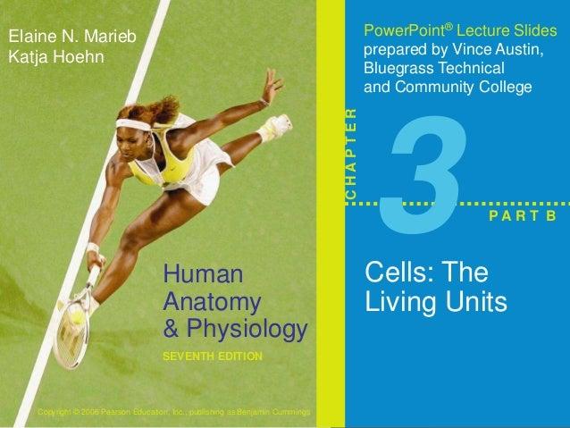 Human  Anatomy  & Physiology  SEVENTH EDITION  Elaine N. Marieb  Katja Hoehn  Copyright © 2006 Pearson Education, Inc., pu...