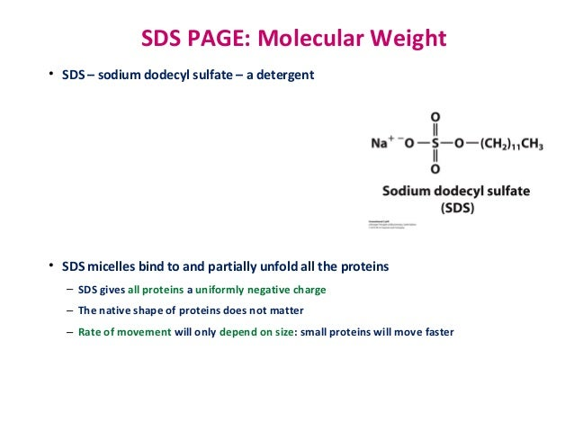 Lehningersixth edition ch 03 amino acids peptides and proteins 65 molecular methods of fandeluxe Images