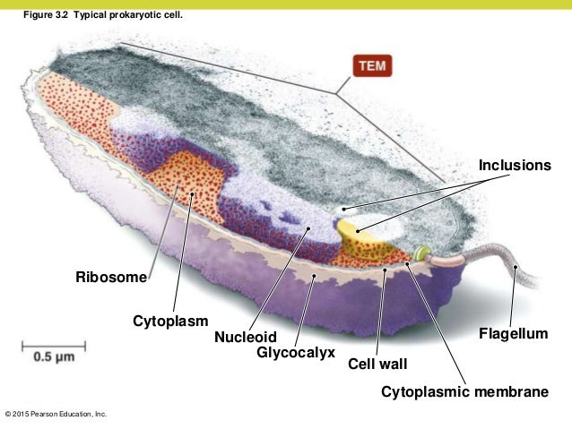 Microbiology Ch 03 lecture_presentation
