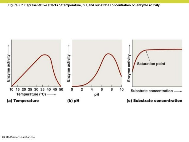 The effect of tempature on enzyme