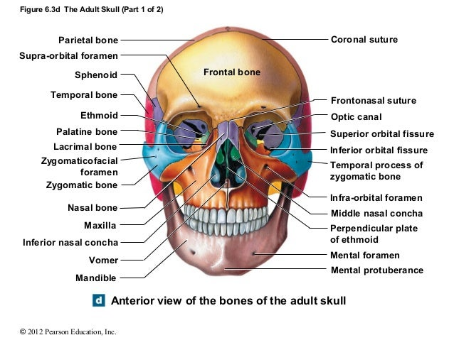 the skull is a complex structure Historically, the complex anatomical relationships of many important structures  within the skull base have made surgical management particularly difficult.