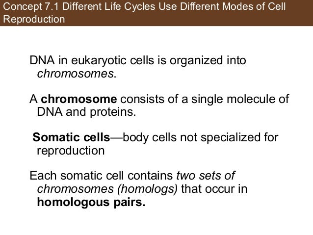 Concept 7.1 Different Life Cycles Use Different Modes of Cell Reproduction DNA in eukaryotic cells is organized into chrom...