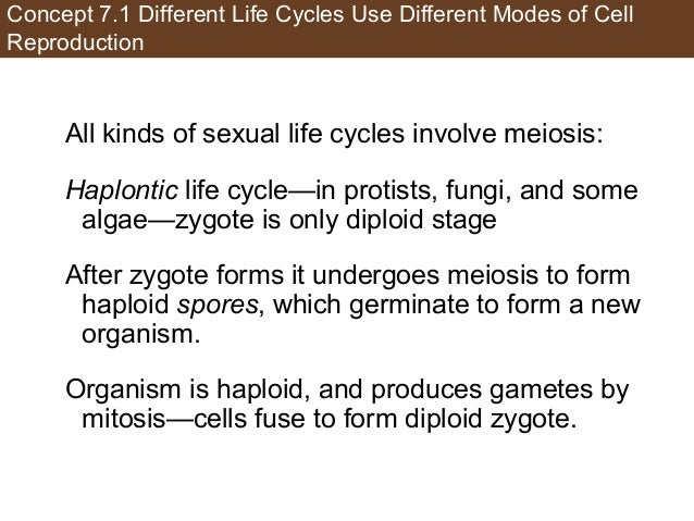 Concept 7.1 Different Life Cycles Use Different Modes of Cell Reproduction All kinds of sexual life cycles involve meiosis...
