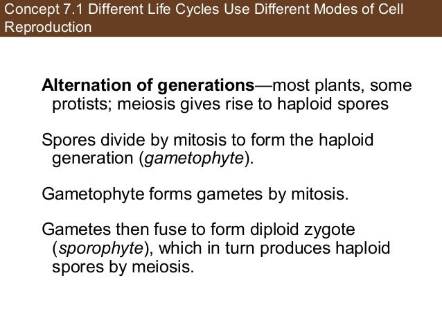 Concept 7.1 Different Life Cycles Use Different Modes of Cell Reproduction Alternation of generations—most plants, some pr...