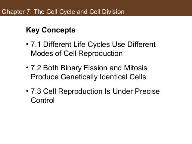 Chapter 7 The Cell Cycle and Cell Division Key Concepts • 7.1 Different Life Cycles Use Different Modes of Cell Reproducti...
