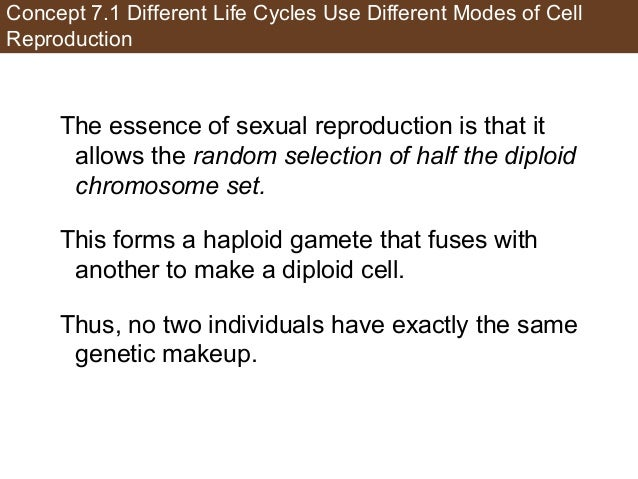 Concept 7.1 Different Life Cycles Use Different Modes of Cell Reproduction The essence of sexual reproduction is that it a...
