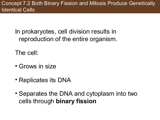 Concept 7.2 Both Binary Fission and Mitosis Produce Genetically Identical Cells In prokaryotes, cell division results in r...