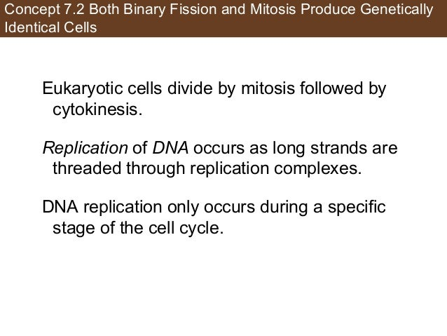 Concept 7.2 Both Binary Fission and Mitosis Produce Genetically Identical Cells Eukaryotic cells divide by mitosis followe...