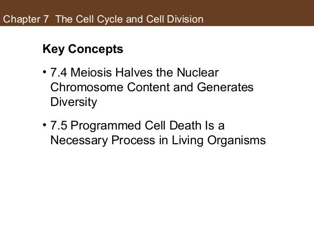 Chapter 7 The Cell Cycle and Cell Division Key Concepts • 7.4 Meiosis Halves the Nuclear Chromosome Content and Generates ...