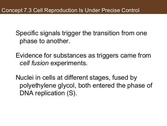 Concept 7.3 Cell Reproduction Is Under Precise Control Specific signals trigger the transition from one phase to another. ...