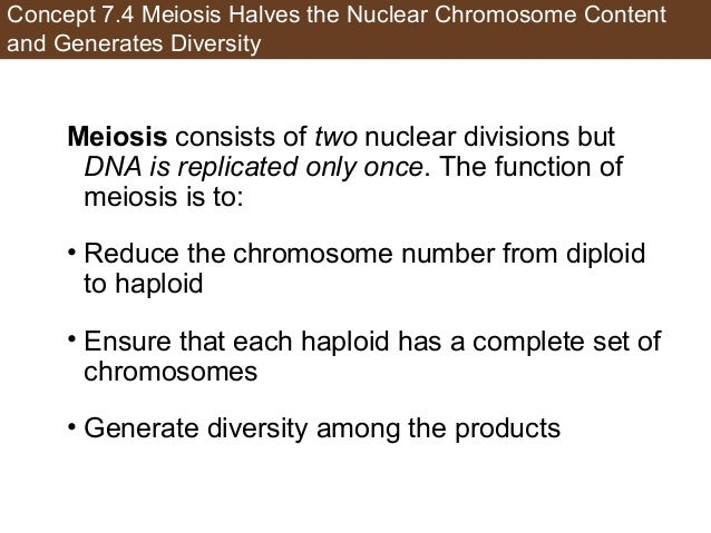 Concept 7.4 Meiosis Halves the Nuclear Chromosome Content and Generates Diversity Meiosis consists of two nuclear division...