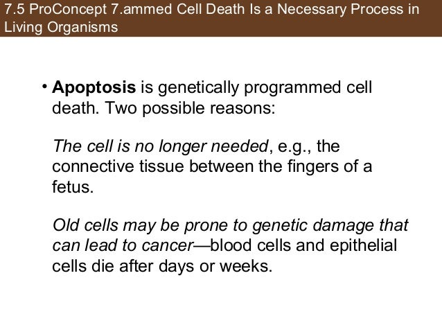 7.5 ProConcept 7.ammed Cell Death Is a Necessary Process in Living Organisms • Apoptosis is genetically programmed cell de...