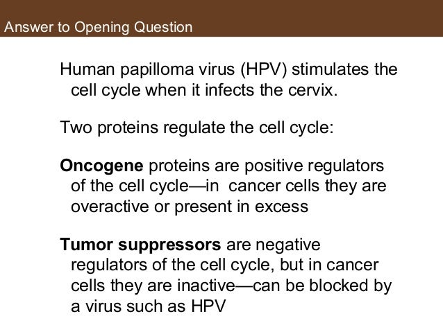 Answer to Opening Question Human papilloma virus (HPV) stimulates the cell cycle when it infects the cervix. Two proteins ...