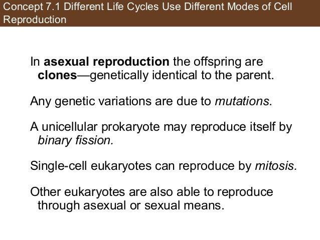 Concept 7.1 Different Life Cycles Use Different Modes of Cell Reproduction In asexual reproduction the offspring are clone...