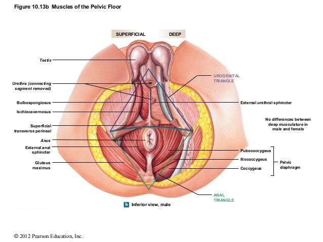 female anus views
