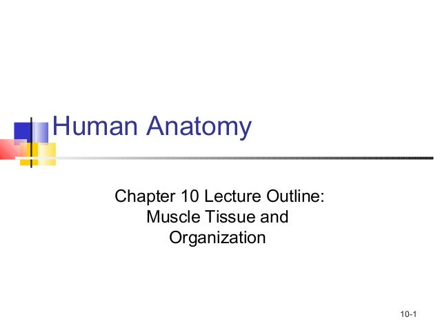 10-1 Human Anatomy Chapter 10 Lecture Outline: Muscle Tissue and Organization
