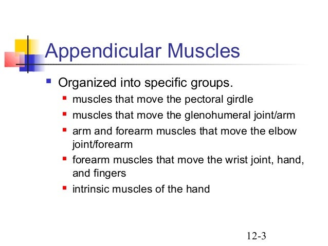 appendicular muscles, Muscles