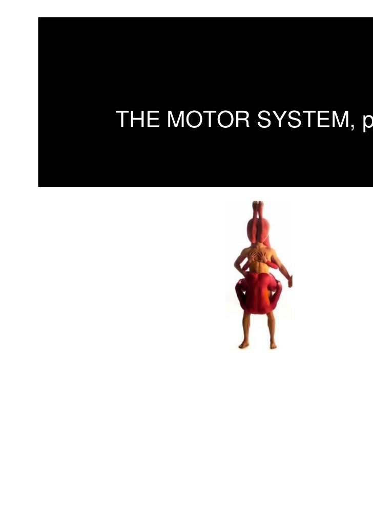 THE MOTOR SYSTEM, part I