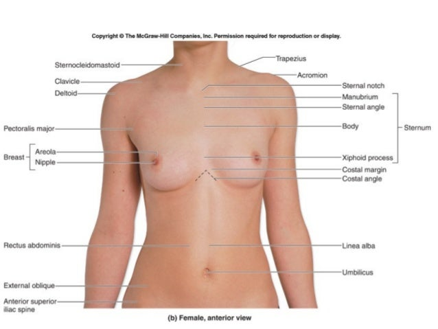 surface anatomy - Acur.lunamedia.co
