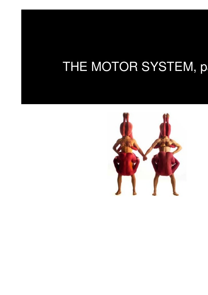 THE MOTOR SYSTEM, part II