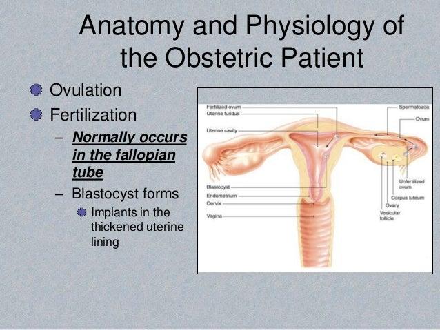 Großzügig Anatomie Und Physiologie Lehrplan College Bilder ...