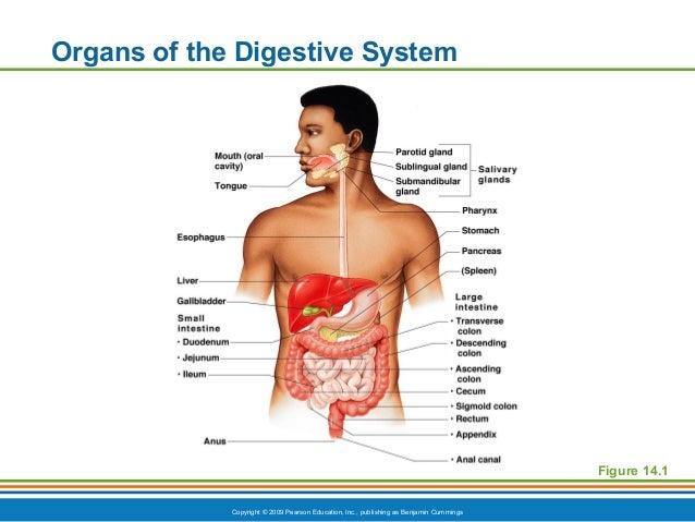 Ch14ppt digestive standard