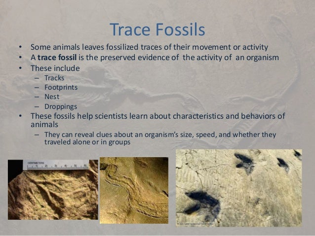 an analysis of the topic of the sediments and trace fossils They identified u-shaped, penetrative trace fossils, called arenicolites, from 11 beds located more than 130 meters below the lowermost occurrence of treptichnus pedum, widely recognized as the.