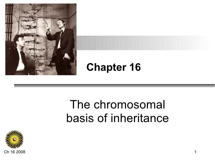 Chapter 16 The chromosomal basis of inheritance