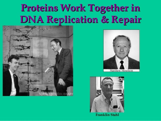 Proteins Work Together in DNA Replication & Repair  Franklin Stahl
