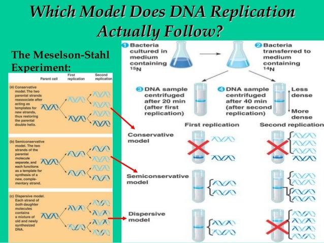 Dna replication ap bio essay enzyme