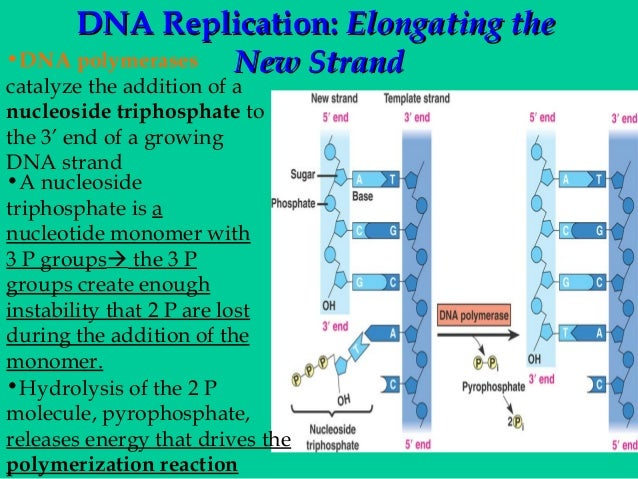 ap bio dna essays Superior ap biology test and course preparation with ap bio notes, study guides, sample test questions and videos.
