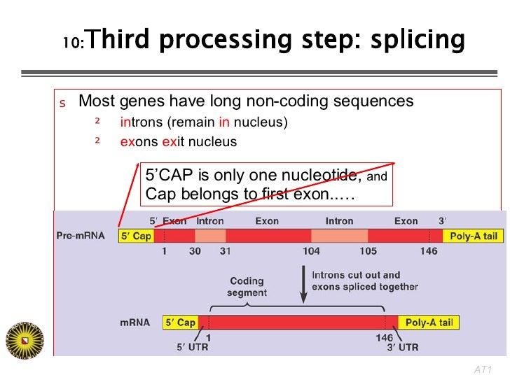 10: Third processing step: splicing <ul><li>Most genes have long non-coding sequences </li></ul><ul><ul><li>in trons (rema...