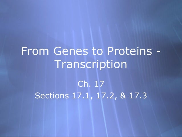 From Genes to Proteins Transcription Ch. 17 Sections 17.1, 17.2, & 17.3