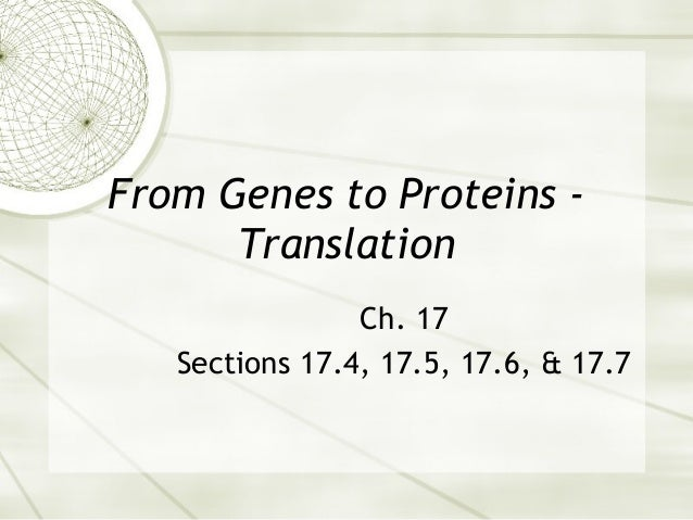 From Genes to Proteins Translation Ch. 17 Sections 17.4, 17.5, 17.6, & 17.7