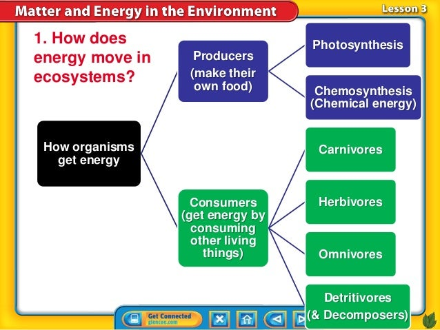 How does photosynthesis show energy conservation invariance thesis